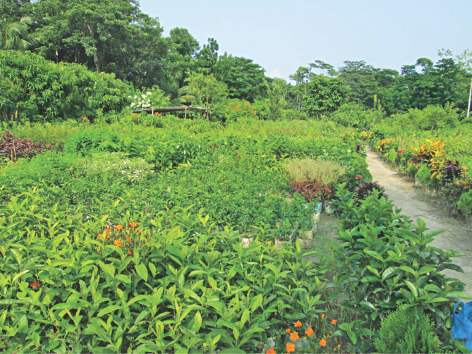 An eye catching plants' nursery at Nesarabad upazila under Pirojpur. Photo: Star