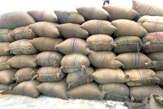 Bags refilled with 'test relief' rice from earlier season get to the government warehouse in Hakimpur upazila of Dinajpur district, along with fresh rice under the ongoing boro procurement drive although the whole amount is supposed to be collected from the recent harvest. PHOTO: STAR