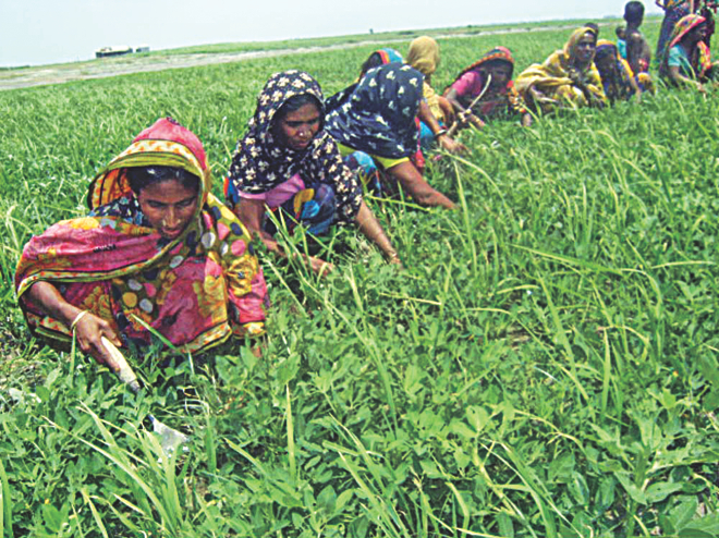 Despite working as hard as men in farmlands, women of char villages at Bera upazila are deprived of basic needs. PHOTO: STAR