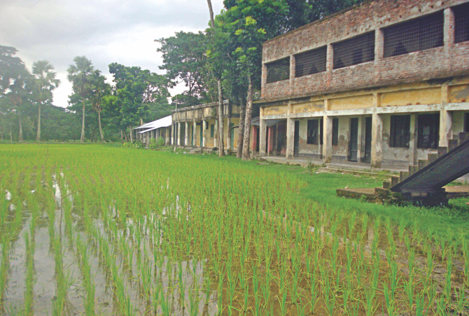 """The playground of Sehakathi High School in Patuakhali Sadar upazila has been turned into a paddy field. The authorities might have felt that students don't have to take part in sports. They also seem to have forgotten that """"All work and no play makes Jack a dull boy"""". The photo was taken last week.  Photo: Star"""
