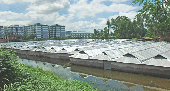 People have built rows of corrugated iron sheet houses on the edge of the Dhaka-Tangail highway in the hope of getting compensation before work on the expansion of the highway begins. Some have even rented land to build such structures. The photo was taken at Dherua of Mirzapur.  Photo: Mirza Shakil