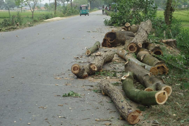 Logs lie beside Sylhet-Dhaka highway near Chunarughat upazila headquarters in Habiganj district, bearing testimony to the mindless felling of such trees during the last several days.  PHOTO: STAR