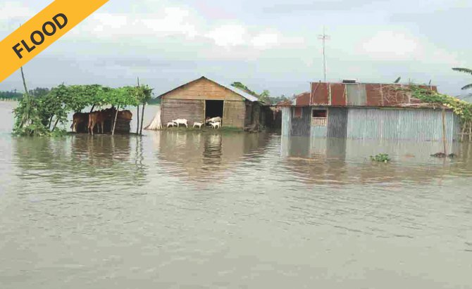 CONTRAST : A vast area in Sundarganj of Gaibandha has been flooded, while in some other parts of the district, water to rot jute is a big concern for farmers.  Both Dinajpur and Gaibandha are northern districts and the photos were taken on Friday and Tuesday respectively.  Photo: Star