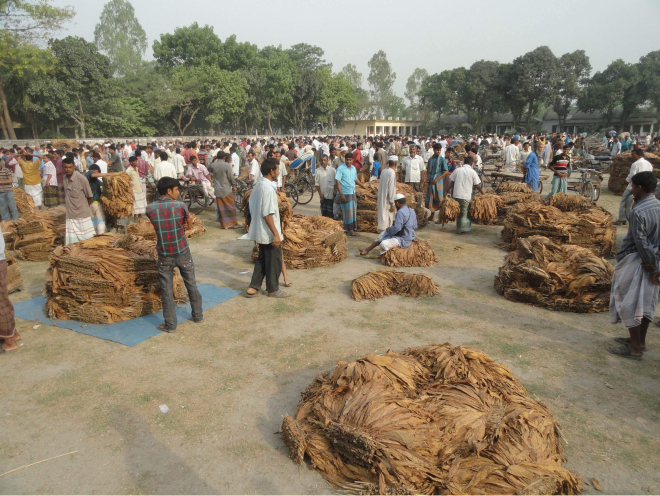 The ground of Saptibari High School in Aditmari upazila under Lalmonirhat district remains virtually off limits to students as unscrupulous people are using it for selling  tobacco. The callous act, disturbing classes and posing health hazards for students and teachers, is likely to continue for three months. PHOTO: STAR
