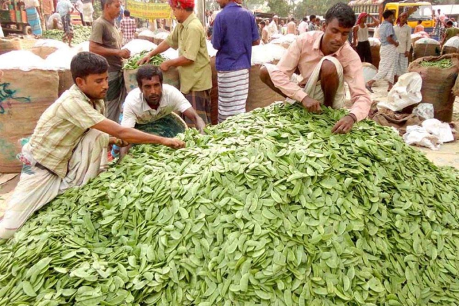 Wholesalers bring huge quantities of beans and other vegetables to Muladi market in Ishwardi of Pabna, only to count loss for lack of buyers due to hartals and blockades. PHOTO: STAR