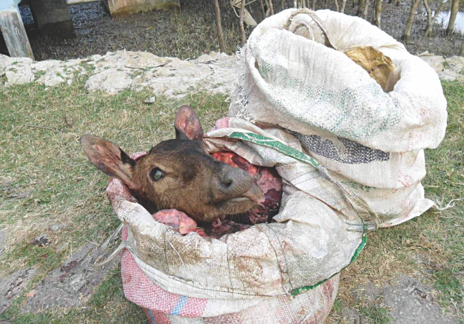 Two sacks of venison seized by police in the Sundarbans west division in April. Venison is not rare in the area as several groups of poachers are active there due to poor monitoring of forest officials.  Photo: Courtesy