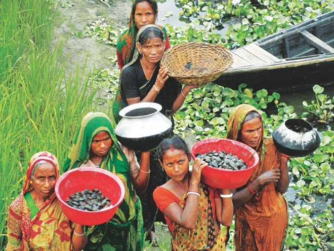 Women bring in oysters collected from Sati river in Gokunda village of Lalmonirhat. Underprivileged people of the area have been collecting and selling oysters to earn a little more to support their families.   Photo: Star