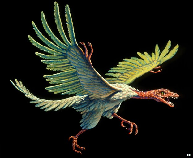 Could Archaeopteryx really fly? Photo taken from BBC