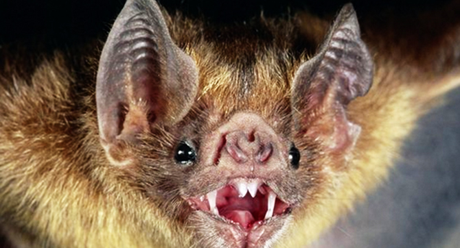 Bats found to use the sun's polarization patterns as guides during flight.