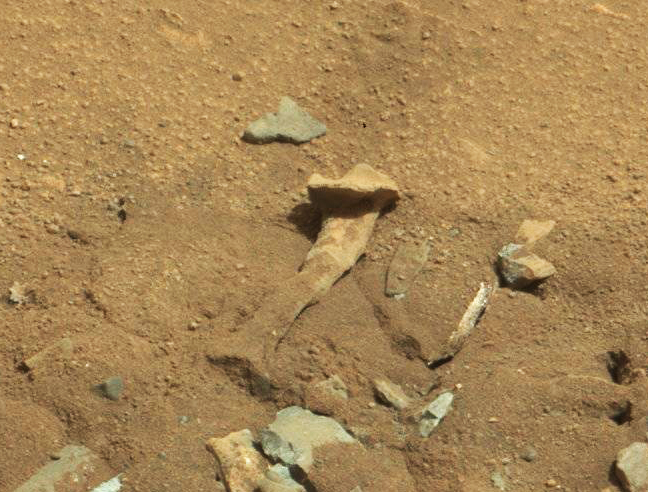 Alien thigh bone? NASA says highly unlikely. Photo: NASA