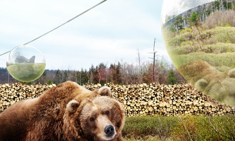Fly-by viewing … visitors will float above bears' heads on a cable car. The image is taken from the Guardian website.
