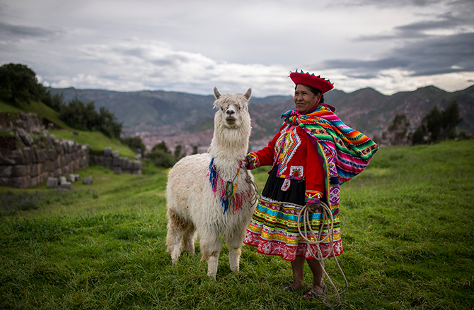 An indigenous Peruvian woman poses with her Llama at Sacsayhuaman above the Incan city of Cusco, on January 13, 2014 in Cusco, Peru. The historic town of Cusco lies high in the Andes and is the typical rest-stop for tourists bound for Machu Picchu. Photo: Getty Images