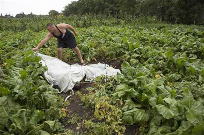 A man covers a body with a plastic sheet near the site of a crashed Malaysia Airlines passenger plane near the village of Rozsypne, Ukraine, eastern Ukraine Friday, July 18, 2014. Photo: AP