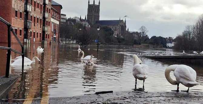 Swans wander down a flooded street in Worcester. Photo: BBC