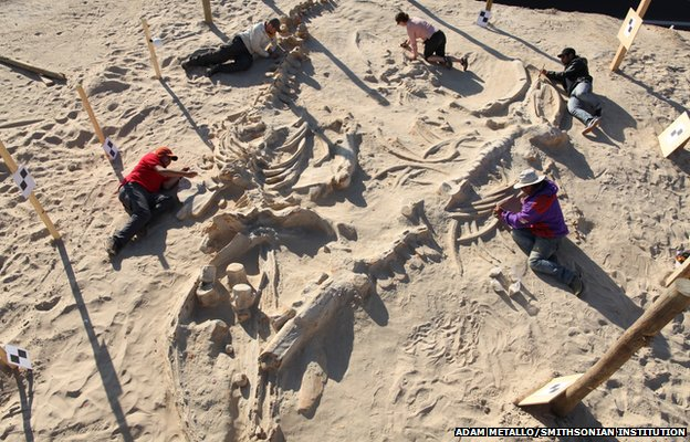 The skeletons are remarkably complete, having being subjected to very little scavenging at death