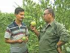 Thai guavas enhance farm income in Natore