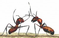 Ants help cool Earth's climate