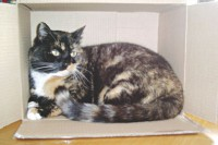 Why cats like to sleep in cardboard boxes