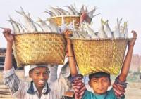 Sustaining food security