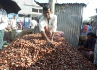 Seed crisis poses threat to onion farming in Pabna