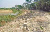 Over 5,000 trees felled for repairing embankment