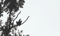 Vultures' Zone
