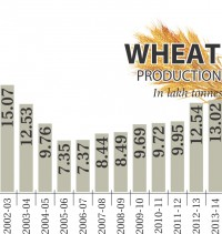 Wheat production highest in 11 years