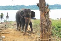 Wild elephants trample 3 in Satkania